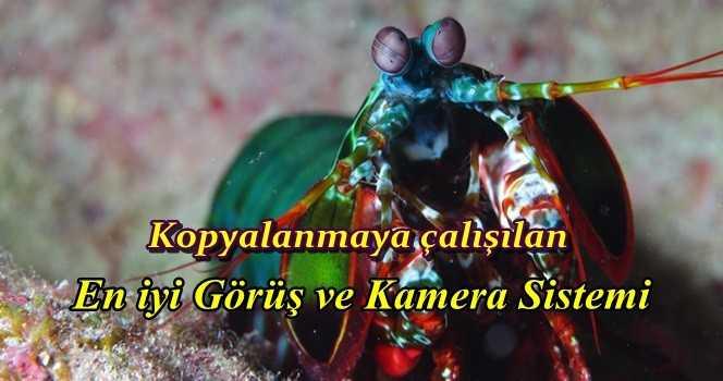 İnsansız Otomobillerin İlham Kaynağı Mantis Karidesi